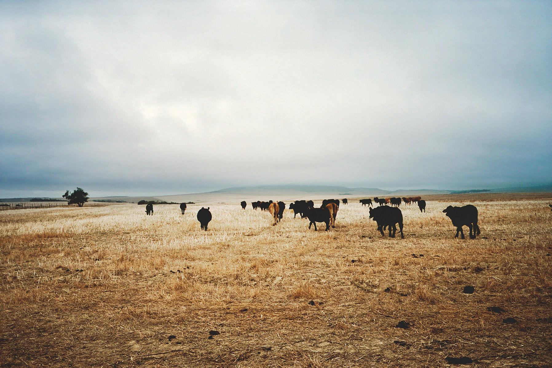 352_23-Florian-Lierzer-Landscape-South-Africa-OR