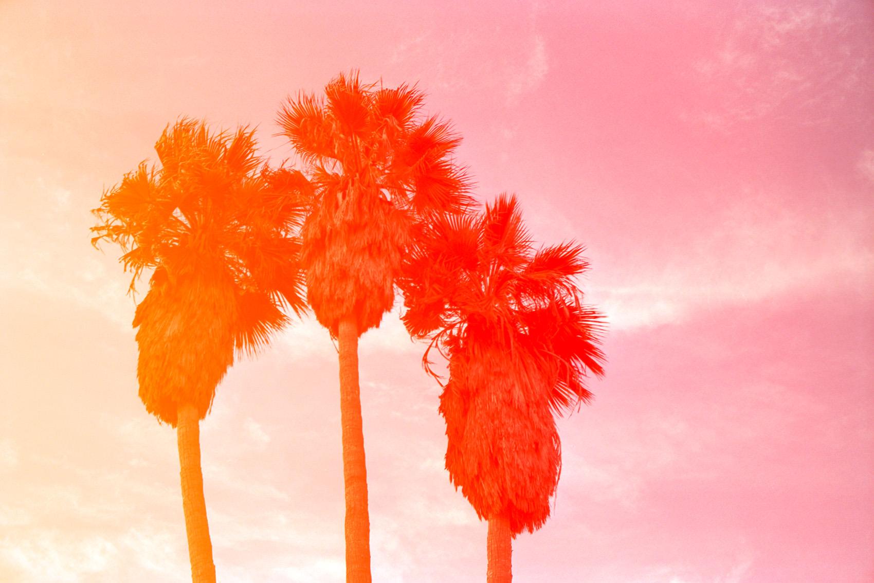 109_31-II-florian-lierzer-Palmen-Venice-Beach-California-USA1