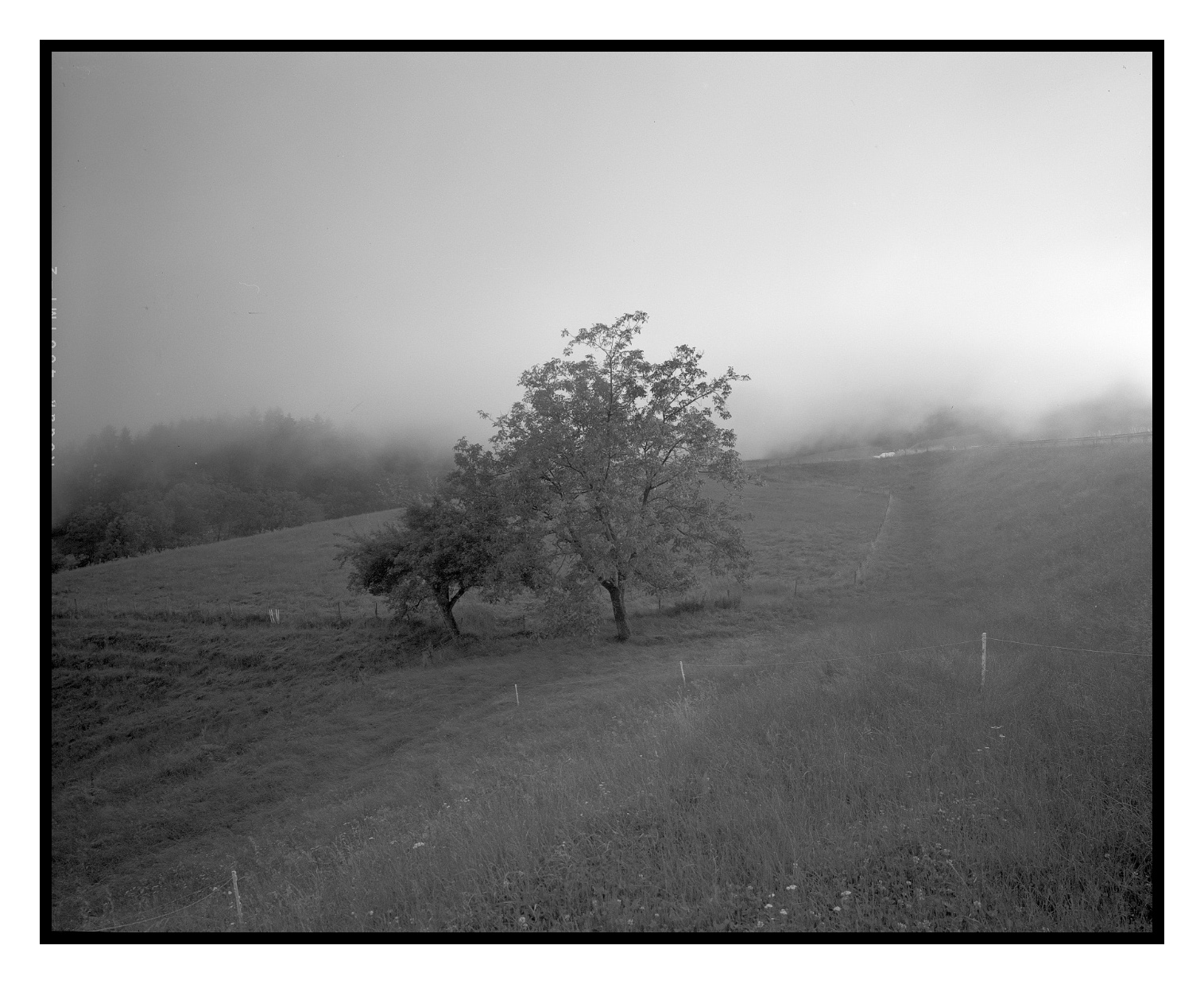 film-481.1-1500px-II-frame